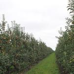 Alţi 16 producători de fructe din Moldova ar putea ajunge pe piaţa Rusiei