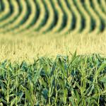 В 2015/16 МГ Украина экспортирует 36,8 млн. тонн зерна – Минагропрод