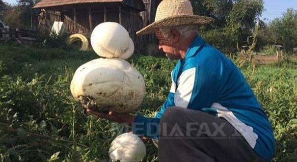 Ciuperci gigant de 3 kg, în grădina unui sătean din judeţul Cluj