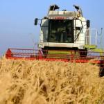 Rusia, România şi Ucriana prăbuşesc preţul mondial al grâului
