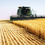 România, ţara europeană cu cei mai mulţi oameni care lucrează în agricultură