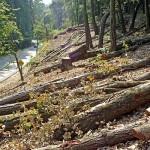 Albania va interzice tăierea copacilor pe o perioadă de 10 ani