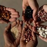 FAO: Preţurile alimentelor au  crescut cu 3,9% în luna octombrie din cauza condiţiilor meteo