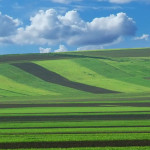 Străinii au acaparat aproape jumătate din terenul agricol al României!