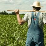 O realitate tristă: agricultorii rămân fără subvenţii