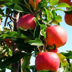 Banca Mondială oferă 10 milioane USD pentru agricultura autohtonă
