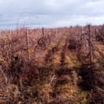 În Rusia vor fi confiscate terenurile agricole nelucrate timp de un an