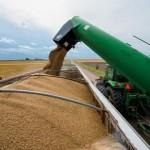 Recoltele de grîu în scădere în Rusia, Ucraina, România şi Bulgaria