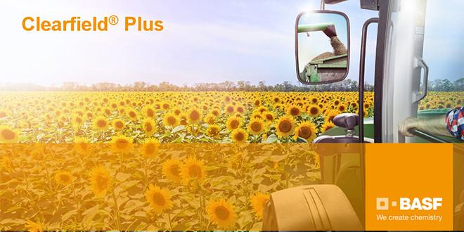 Clearfield Plus – самая инновационная технология выращивания подсолнечника