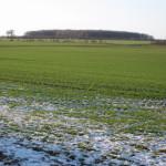 Procesul de iernare a culturilor de toamnă a decurs bine