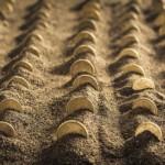 Ministrul agriculturii îi îndeamnă pe agricultori să investească în afine şi nuci