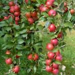 Noi promisiuni pentru agricultori: Compensaţiile vor fi acordate până la mijlocul lunii februarie