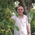 Nuci care pot aduce fermierilor un profit de 15.000 de euro pe hectar