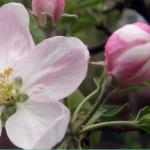 Малахит — кристальная формуляция для защиты Вашего сада