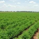 Granturi de până la 20 000 de dolari pentru agricultori
