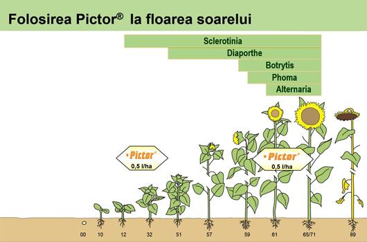 Folosire-fungicid-Pictor-BASF