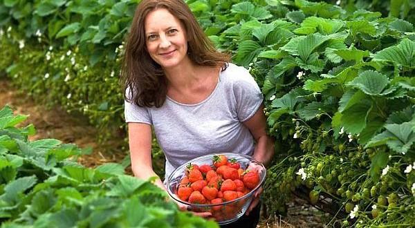 Cele mai profitabile soiuri de căpșuni aduc venituri cel puțin 22.000 de euro/hectar