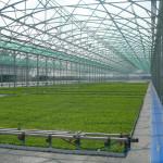 La Cărpineni va fi instalat cel mai mare sistem termic cu biomasă pentru încălzirea serelor