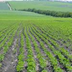 87% din suprafeţele planificate au fost semănate cu culturi de toamnă
