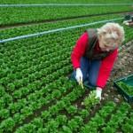 Cum a ajuns ferma de familie baza agriculturii naţionale în Polonia
