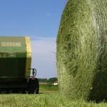 Fânul, o afacere pentru fermierii din Germania
