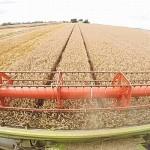 Producţie de 10.400 de kg/ha cu soiul de grâu Glosa. Secretele recoltei