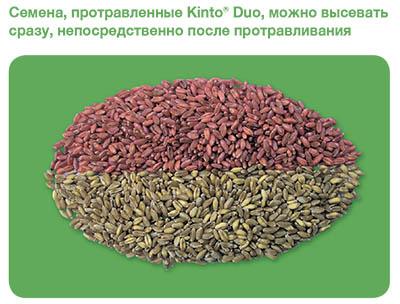 Culoare-Kinto-rus