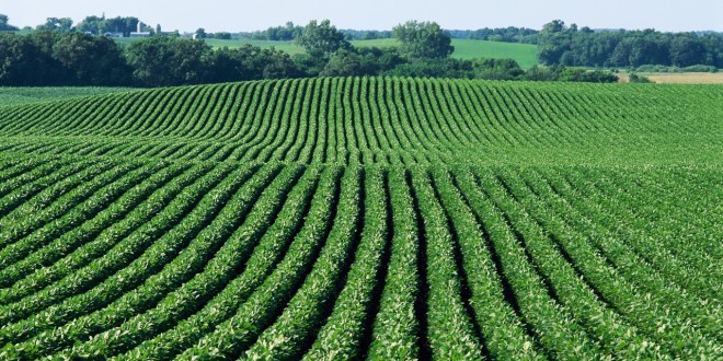 Cum să obţinem o recoltă maximă de soia în condiţiile anului 2016?