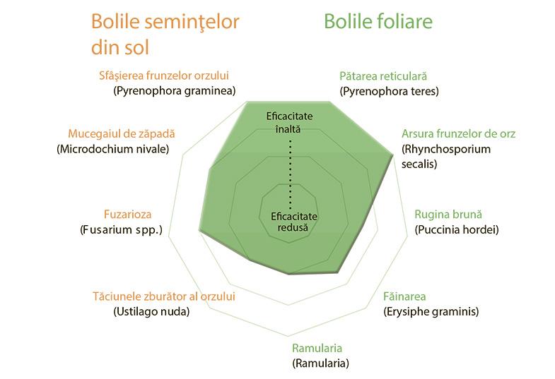 Boli-sistiva-romana
