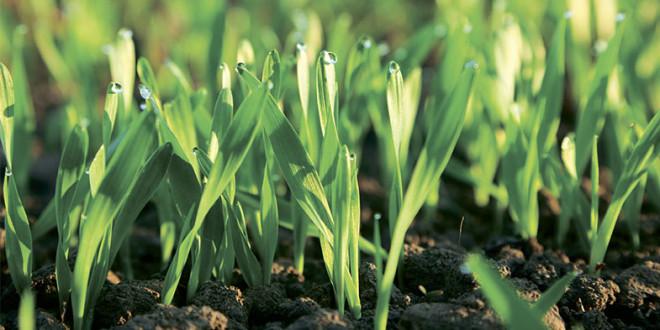 Insure™ Perform – vigoare pentru plante, scut contra bolilor!