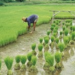 China va investi 450 de miliarde de dolari în agricultură până în 2020
