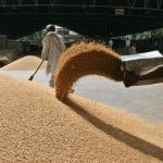 Problemele Egiptului cu importurile de grâu s-au agravat