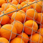 Rosselhoznadzor a anunţat suspendarea temporară a importurilor de fructe şi legume din Egipt