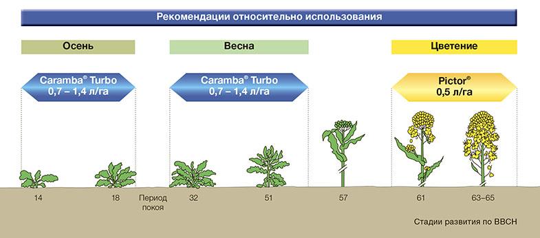 caramba-13