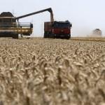 Fermierii români nu profită decât în mică măsură de recoltele-record din 2016