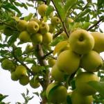 Exporturi-record de cereale şi fructe