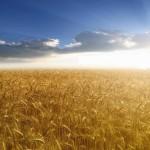 Investitorii arabi, interesaţi de piata agricolă din România
