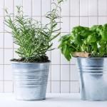 5 plante aromatice care curăță aerul din bucătărie