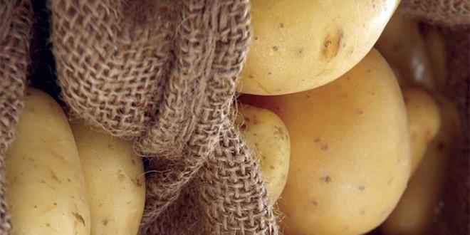 Sistemul de protecţie al culturii de cartof cu produse BASF