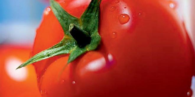 Sistemul de protecţie al culturii tomatelor cu produse BASF