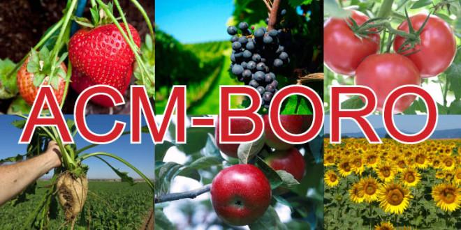 ACM-BORO – fertilizant foliar lichid cu un conţinut înalt de bor (11%)