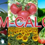 ACM-CALCIO – fertilizant foliar lichid cu un conţinut înalt de calciu