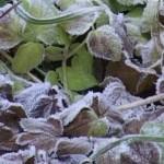 Avertizare meteorologică: cod galben de îngheţuri