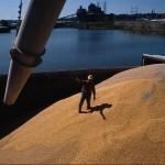 Egiptul cumpără din nou grâu din România și Rusia