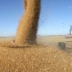 Ucraină intensifică comerţul extern cu produse agricole