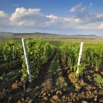 România – ţara europeană cu cei mai mulţi proprietari de podgorii