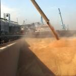 Exporturile de grâu ale Rusiei estimate să atingă un record istoric