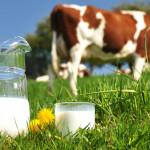 Pretul laptelui în scădere în Europa, dar superior celui din 2016