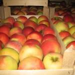 Dosarul ANSA: şase persoane reţinute pentru escrocherii la exportarea merelor poloneze în Federaţia Rusă