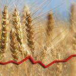 Stocurile globale de grâu ating un nivel record